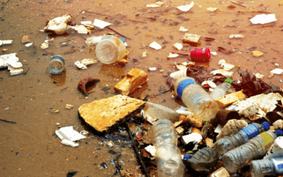Reducing single-use plastic in wales