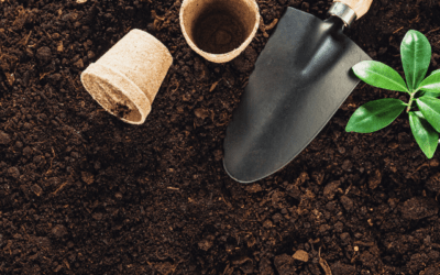 Plastic-free garden